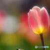 秘密の花園✿彩