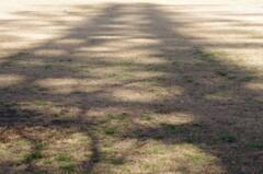 枯芝に映る…