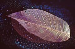 Fake leaf world