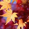苑の紅葉-5