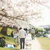 ありふれた桜下の 03