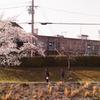 ありふれた桜下の 08