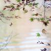 残秋の色彩