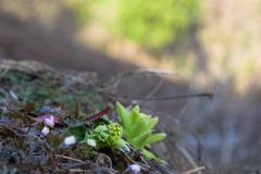 春の山散策