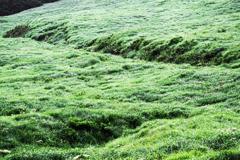 緑の仙石原