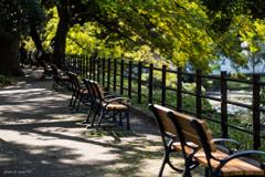 日比谷公園ベンチその2