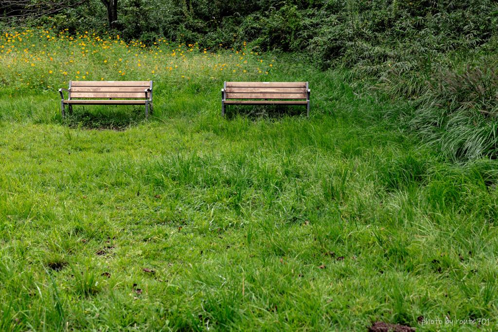 草叢のベンチ