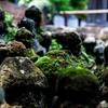 報国寺の石塚