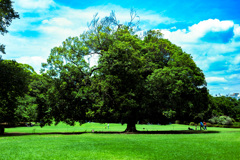 新宿御苑の木