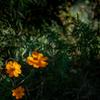 木漏れ日の中の花