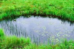 浄土平湿原の池