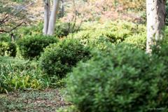 日比谷公園の緑