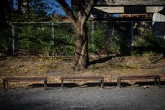 陽射しの中のベンチ