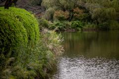 池端のススキ