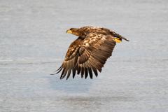 飛び立つ猛禽