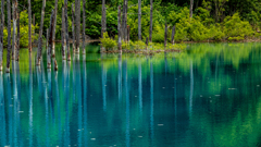 Blue trees in the pond