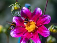 花から花への大忙し