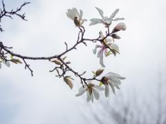 見上げる春
