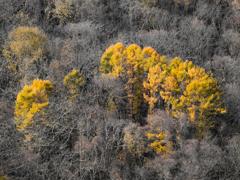 「秋の終わり」若しくは「冬の始まり」
