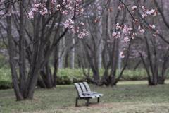 春の特別席