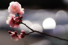 小春日和♪