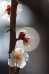 春のひととき