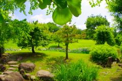 緑多き公園