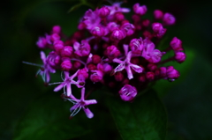 小花がいっぱい