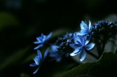 陰に咲く  IMGP9311
