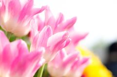 春の喜び★