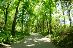 木陰の一本道