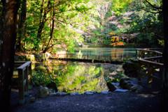 伊勢神宮の池