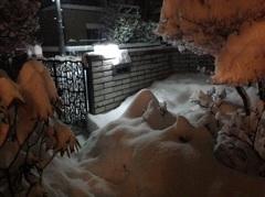 待望の雪、しかし・・・(^_^;)