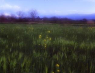 過ぎ行く春2 (フィルムの残像)