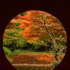 晩秋の鎌倉散歩 明月院①