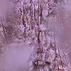 滴る枝垂れ桜