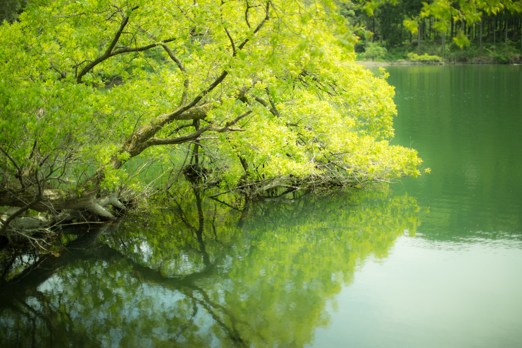 富山ー石川県境 蛇ヶ池