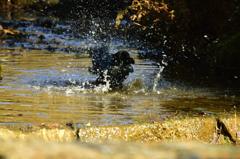 カラスの行水6