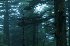 森の中から