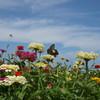 空とお花畑と