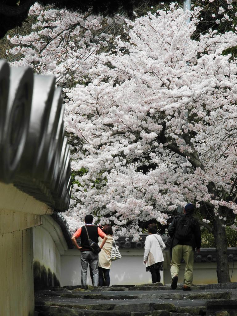 桜 満作。