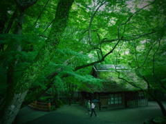 奈良の散歩道。