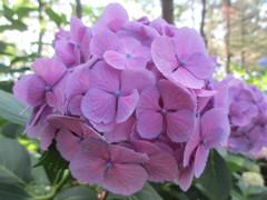 庭の花 その2(徳山雅士)