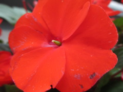 庭の花 その1(徳山雅士)