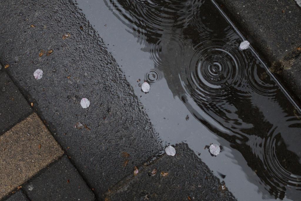 雨の日 その2