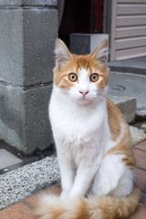 近くで会えた猫さん