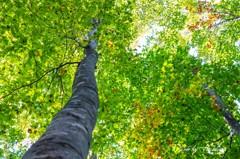 秋化粧前の美人林