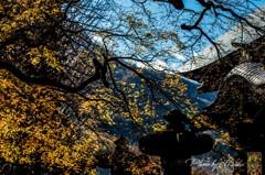 西善寺の大楓