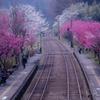 花満開の神戸駅