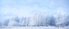 初冬の高原